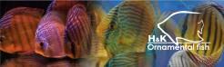 Lista de Espécies Selvagens H&K-Hudson Crizanto para encomenda até 29 de Agosto 2020