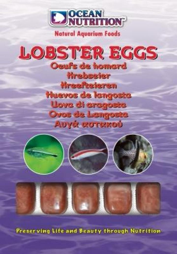Ovos de Lagosta ( 10 cubos ) 100grs