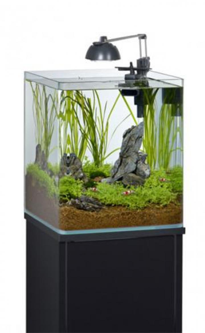 Aquário Nano shrimp 35