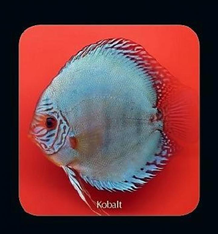 Discus  Kobalt 5cm